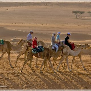 Book Wahiba Sands To Wadi Bani Khalid Tours