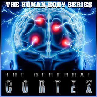 Cerebral Cortex (The Human Body Series)