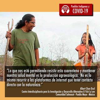 México: Situación del pueblo Maya frente a la pandemia