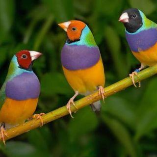 Las aves del campo