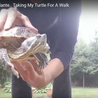 Hanging With Andante.. Taking My Turtle For A Walk