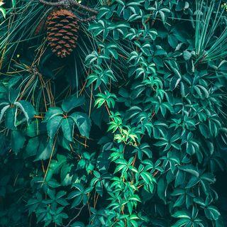 20 - Come Le Piante Conquisteranno Il Mondo - Botanica