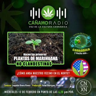 CAÑAMO RADIO Emisión 81