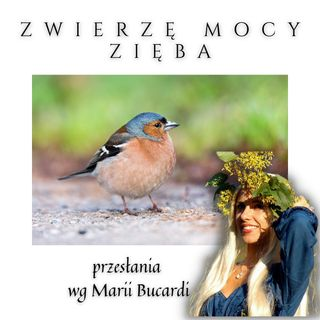 Zwierzę Mocy - Zięba zwyczajna - przylatuje z przesłaniem, by otworzyć swoje serce| Maria Bucardi