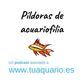 Píldoras de acuariofilia #5 - Peces Limpiadores
