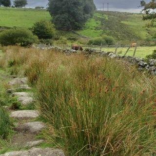 Inondazioni per combatterle il Regno Unito sceglie la via della riforestazione