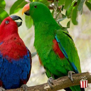 In 50 anni il mondo ha perso due terzi della fauna selvatica