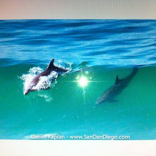 Episode 113 Shark in the water