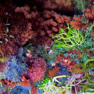 MACROALGAE - THE GOOD, THE BAD AND EVERYTHING IN-BETWEEN!