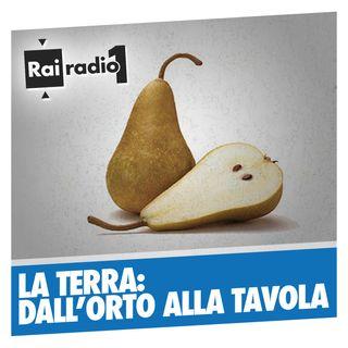 LA TERRA del 02/07/2016 - In diretta dal Mercato contadino de l'Aquila