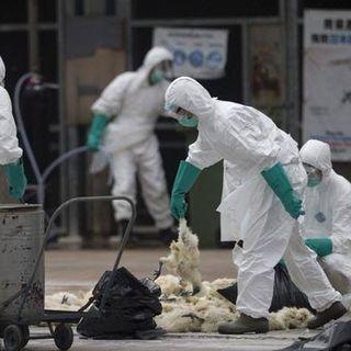 China confirma primeiro caso gripe aviária H10N3 em humanos