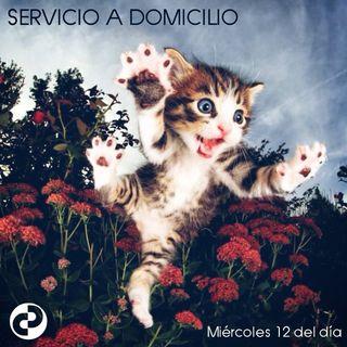 Servicio a domicilio 59