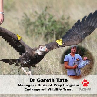 Youth Radio - VULTURES with DrGarethTate