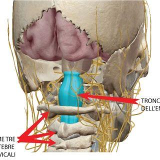 Cervicale superiore suo coinvolgimento nel rapporto Occlusione-Postura