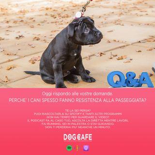 #056 - Q&A - Oggi rispondo alle vostre domande. Perchè i cani spesso fanno resistenza alla passeggiata?
