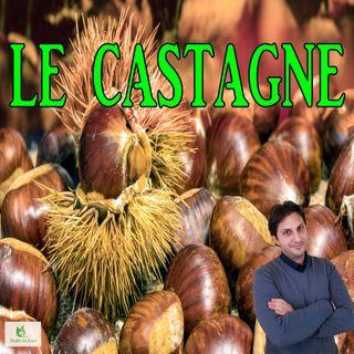 Episodio 73 - LE CASTAGNE - Frutto tanto caro, quanto nutriente!
