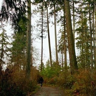 The Rowan and Hawthorn Run