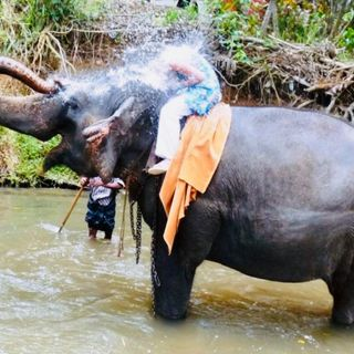 """Odc.1 Sri Lanka """"Największy zwierzak świata i nasza Mama"""""""