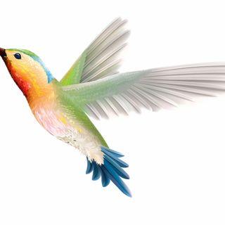 The Hummingbird Saga