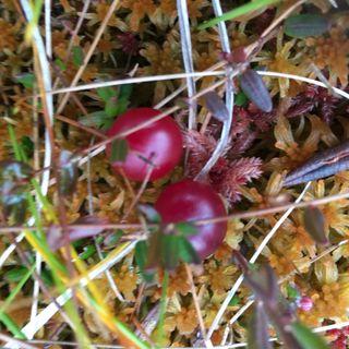 24. Cranberries