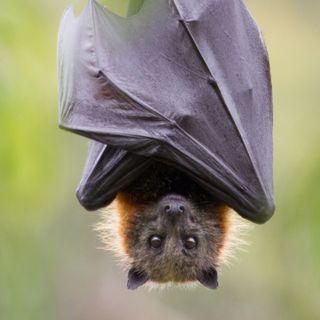 Il panino al pipistrello, scoppia il caso sullo spot