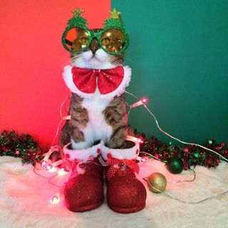 Kitten Kong At Christmas 2019 - Episode 1.