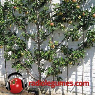 Un jardin fruitier vertical, c'est réalisable!