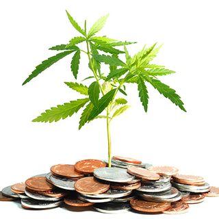 Lavorare nel mondo della Cannabis