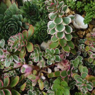 Curarsi con le piante è possibile: i consigli di Alessia Di Donato