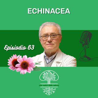 Echinacea uno straordinario stimolante Immunitario da usare razionalmente