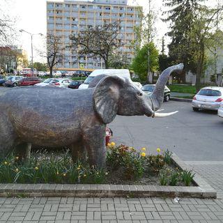 Povídání o slonech v Čechách a na Moravě