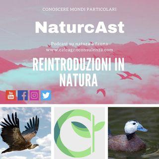Le reintroduzioni in natura