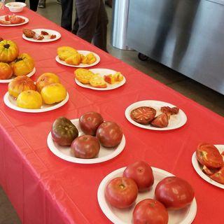 Annual Tomato Contest Held At Boston Public Market