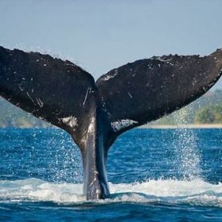 #cspt Whalela balena di fiume