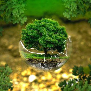 Laudato Sì e questione ecologica