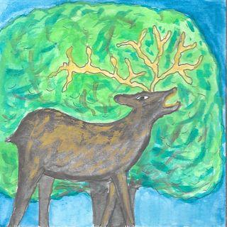 Il cerbiatto e il cervo
