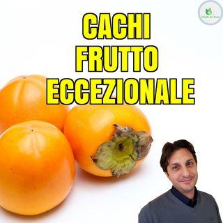 Episodio 7 - SCOPRIAMO I CACHI -  Un frutto eccezionale, dal nome strano!