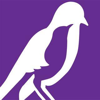 Public Affairs - The Mockingbird Society