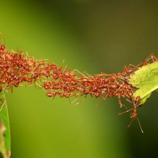 Why Ants Can Rule The World Pt. 1