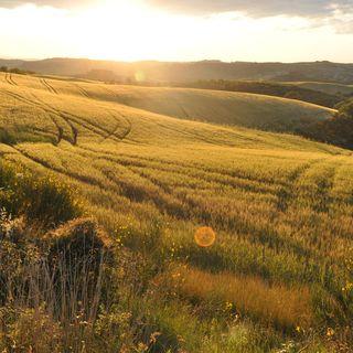 250. CULTURA: Toscana