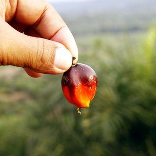 Gli effetti dell'olio di palma