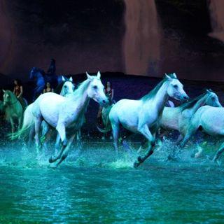 World's Biggest Show Odysseo By Cavalia