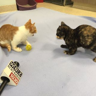 Special Needs Kittens Looking For Home