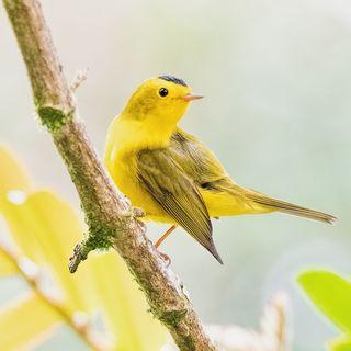 Cantico II, Alda Baglioni, Poesie - Osvaldo Negra, Il canto degli uccelli