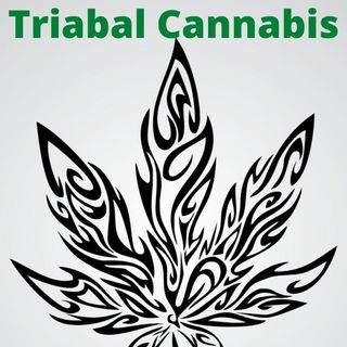 Developing Tribal Opportunities In The Cannabis Market