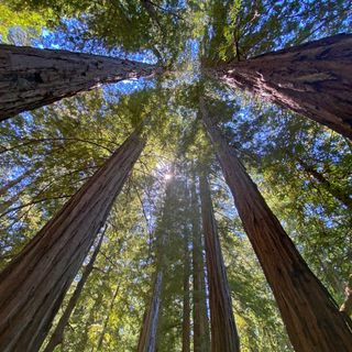 Cittadini alleati per salvare foreste millenarie grazie al crowfunding