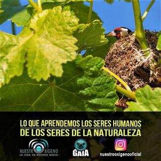 NUESTRO OXÍGENO Los seres humanos aprendemos de los seres de la naturaleza