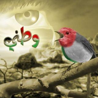 انا من غزة مهد العزة