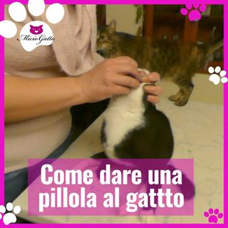 Come dare una pillola al gatto: impresa impossibile?