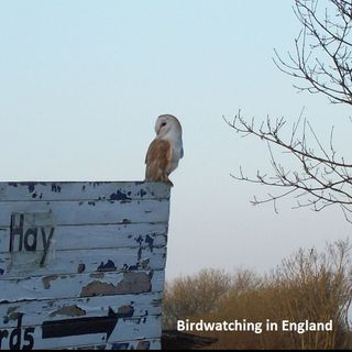 Big Blend Radio: Glynn Burrows - Bird Watching in England